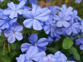 More Blue Flowers by Fully-Stocked
