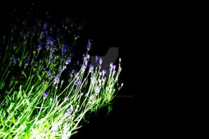 Torch Experiments #1 - Lavender by Paranormal-Hyperbola