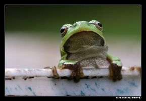 June 2005 Frogs: Froggy by macrophoto