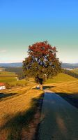 Roadside tree in indian summer colors by patrickjobst