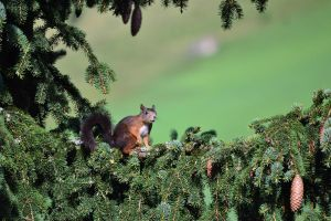 squirrel III by Yvonnev