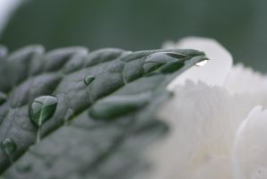 Waterdrop on Leaf by Butterbird88