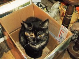 Lovely lady Sophie (RIP) ~ contentment in a box by MystMoonstruck