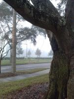 Tree in the Fog by Mitszell