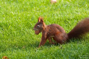 Squirrel 2 by MadeOfSteel