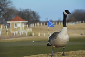 long neck goose by sharebearthepooh