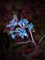 NEON NATURE by ANDYBURGESS