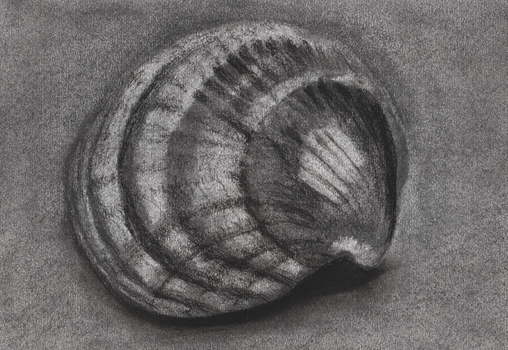 Shell by Alta13