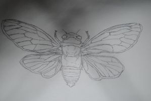 Cicada by AllisonRachel