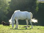 Horse stock 40 by Ulvar-Stock