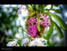 The magical garden II by calimer00