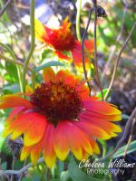 Bright Flower by chelsea2435