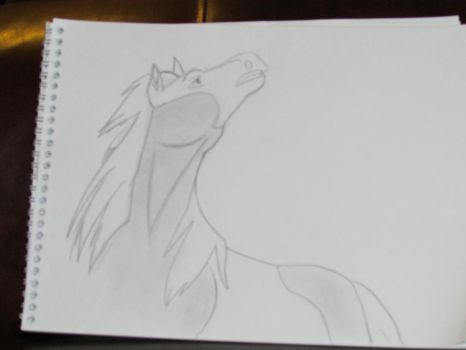 Rain-Spirit Stallion of the cimarron drawing by Heatherannpt