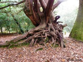 Rooted Tree by pdjpeter