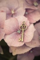 Flower key by NRichey