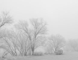 Frozen Fog Morning by SharPhotography