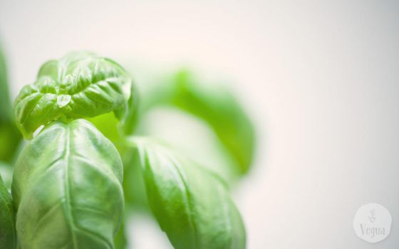 Basil Background by quansie