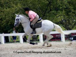 Warmblood 7 by EquineStockImagery