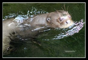South American giant otter by declaudi