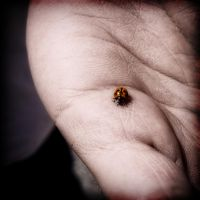 Lady Bird. by AbbottPhotoArt