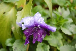 Purple Drops by Faceler