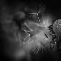 ..: Seeds :.. by Mademoiselle-P