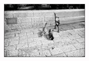 Jaffa cats by thelizardking25