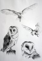 Owls by missmysterious92