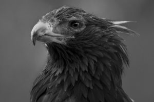 eagle eye by scoot75