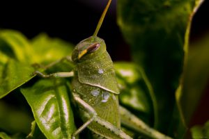 Grasshopper by dannypyle