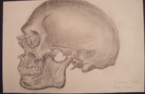 Gray's Anatomy Skull 1 by HaanaArt
