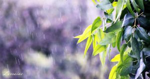 Summer Rain by LorraineB