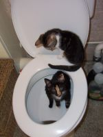 cats in the toilet by Cat-Jann