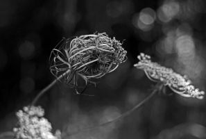Unfurling by dragon-fly-to-me