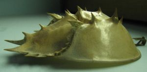 carapace by LuckyStock
