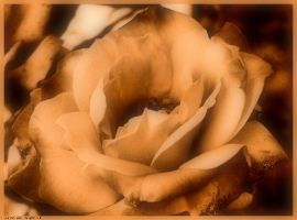 Happy Birthday in Sepia by Tigles1Artistry