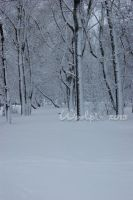 winter Forest 2 by Woolpix