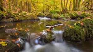 Autumn creek by StefanPrech