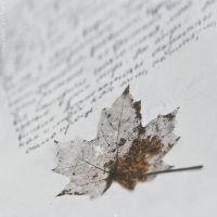 Last year's letter of Autumn by NataliaDrepina