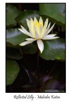 Reflected Lilly by FireflyPhotosAust