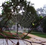 Glass Web by VampireSmiley