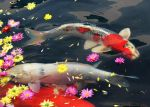 National Day Carp by Sophie-Y