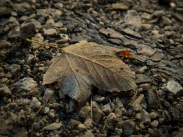 leaf02 By Aldafea by aldafea