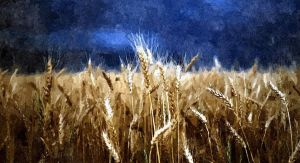 The Fields of Midas by GrahamMillar