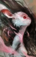 Rabbit by aditya777