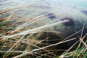 Marram Grass by bollatay
