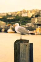 Seagull look out by city17