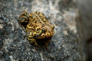 Mr Toad by AndersonPhotography