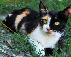 Cat's eyes by marialivia16