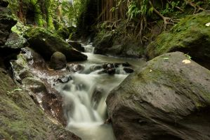 Monkey forest river by SantiBilly